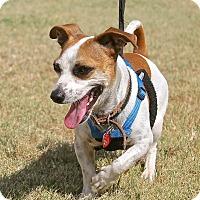 Adopt A Pet :: Buddy - Winters, CA