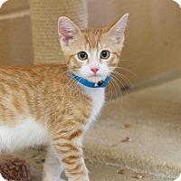 Adopt A Pet :: Miguel - Chula Vista, CA