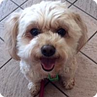 Adopt A Pet :: Pebbles - Surrey, BC