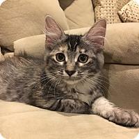 Adopt A Pet :: Sabrina - Flower Mound, TX