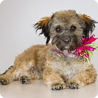 Adopt A Pet :: Dolly - Phelan, CA