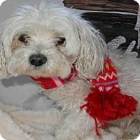 Adopt A Pet :: JULIE - Upland, CA