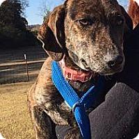 Adopt A Pet :: Iye - In Rhode Island! - Plainfield, CT