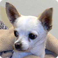 Adopt A Pet :: 328644 LF - Wildomar, CA