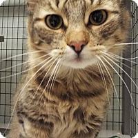 Adopt A Pet :: Jenkins - Grants Pass, OR