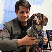 Adopt A Pet :: Parker - Elyria, OH
