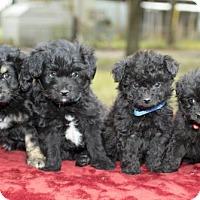 Adopt A Pet :: Cherry's Baby Boys----N - Santa Fe, TX