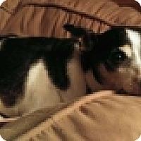 Adopt A Pet :: Maverick - Hamburg, NY