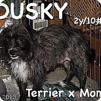 Adopt A Pet :: Dusky - Broomfield, CO