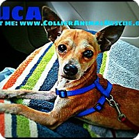 Adopt A Pet :: Luca - Naples, FL