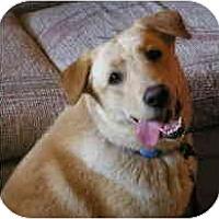 Adopt A Pet :: Allie - Gilbert, AZ