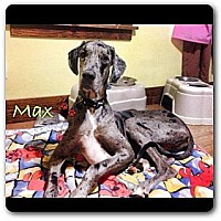 Adopt A Pet :: Max - Maryville, IL