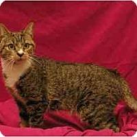 Adopt A Pet :: Hana - Sacramento, CA