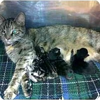Adopt A Pet :: Tabatha - Racine, WI