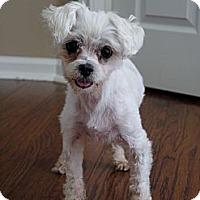 Adopt A Pet :: Allie - Baton Rouge, LA