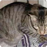 Adopt A Pet :: Hansa - Clementon, NJ