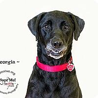 Adopt A Pet :: Georgia - Phoenix, AZ
