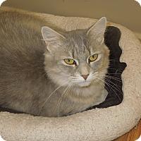 Adopt A Pet :: Abilene - Medina, OH