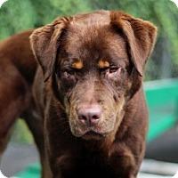 Adopt A Pet :: Sinbad - Port Washington, NY