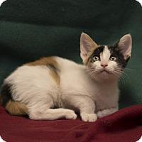 Adopt A Pet :: Marisa - Fountain Hills, AZ