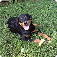 Adopt A Pet :: Kenzie - Frederick, PA