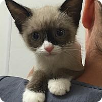 Adopt A Pet :: Ginny - Mission Viejo, CA