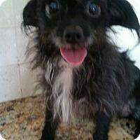 Adopt A Pet :: Oreo - Ocean Ridge, FL