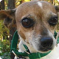 Adopt A Pet :: Hannah - Chesterfield, MO