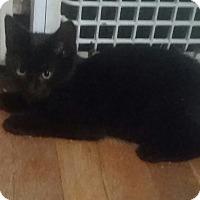Adopt A Pet :: Felix - Cleveland, OH