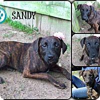 Adopt A Pet :: Sandy - Kimberton, PA