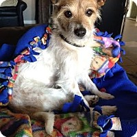 Adopt A Pet :: Rocko - San Antonio, TX