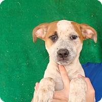 Adopt A Pet :: Fonzi - Oviedo, FL