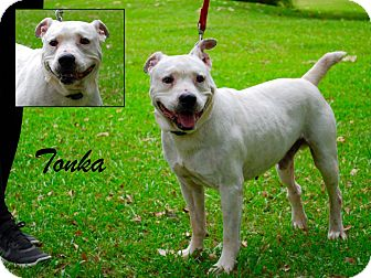Bulldog Mix Dog for adoption in Daleville, Alabama - Tonka