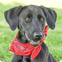 Adopt A Pet :: Remi - Columbia, IL