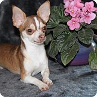 Adopt A Pet :: Tobi - Spring Valley, NY