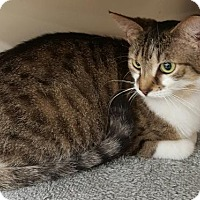 Adopt A Pet :: Kiley -- at PETCO - Germantown, MD