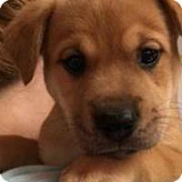 Adopt A Pet :: Prosciutto - Barnegat, NJ