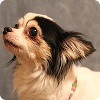 Adopt A Pet :: Mitra - Yukon, OK