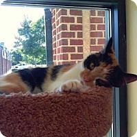 Adopt A Pet :: Stella - Leonardtown, MD