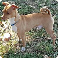 Adopt A Pet :: Stewie - Beacon, NY