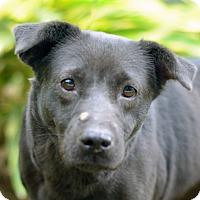 Adopt A Pet :: MERRY - LAFAYETTE, LA