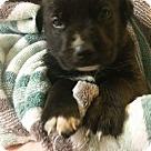 Adopt A Pet :: JOXER