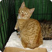 Adopt A Pet :: Redmond - Atlanta, GA