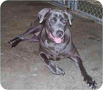 Dog Adoption Suffolk County Ny