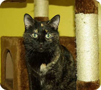 Calico Cat for adoption in Mobile, Alabama - Daisy (aka Weena)