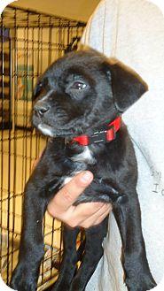 Dogs Medford Oregon Adoption