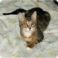 Adopt A Pet :: Chuck-beauty & personnality! - Scottsdale, AZ