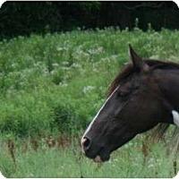Adopt A Pet :: Cheyenne - Lyles, TN