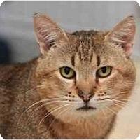 Adopt A Pet :: Casey - Bonita Springs, FL