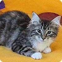 Adopt A Pet :: Ozzie - Davis, CA